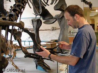 A man is holding the leg bone of a dinosaur.  The bone is just part of a complete large dinosaur skeleton.