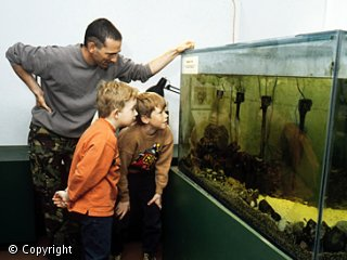 A man and two children are looking at a fish tank.