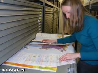 A woman is looking at a number of colourful maps, which she has laid out on a metal drawer in front of her.