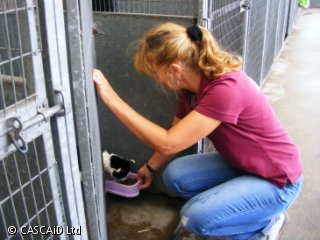 A woman is kneeling down and holding a tray of food in front of a cat, which is in a cat pen.