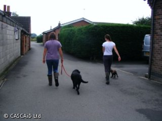 Two women are walking with two dogs on leads.